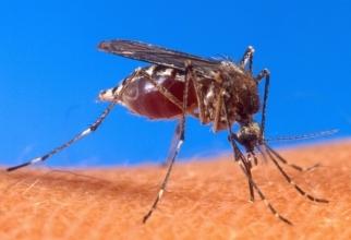 Información sobre fiebre chikunguña