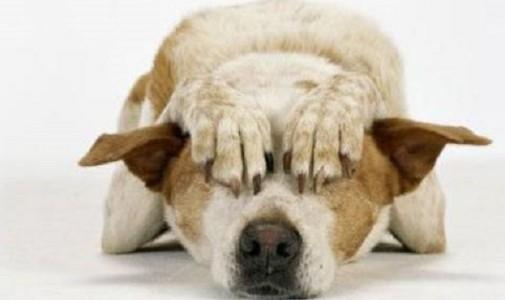 Pirotecnia: un hábito que no tiene nada de festivo para las mascotas